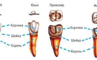 Разрушился зуб до десны